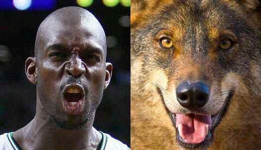 很多NBA球员都喜欢养宠物,然后拿出来分享,这也会让球员们的生活变得多采多姿。  大部分球员的宠物只是可爱的的汪星人和喵星人,但有些认却偏偏喜欢养很奇怪的物种。不仅如此,有的球员甚至为了致敬偶像,把自己的宠物取名为偶像的名字!  1.养猪大户奇才球员戈塔特