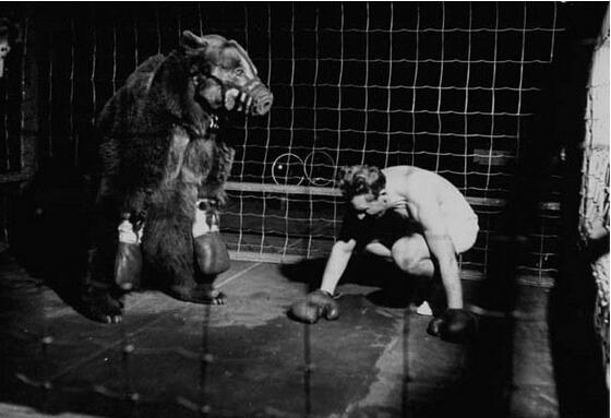 人熊大战结果会如何?被打的毫无还手之力 惨状让人心疼
